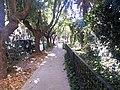 Luz y hojas - panoramio (1).jpg