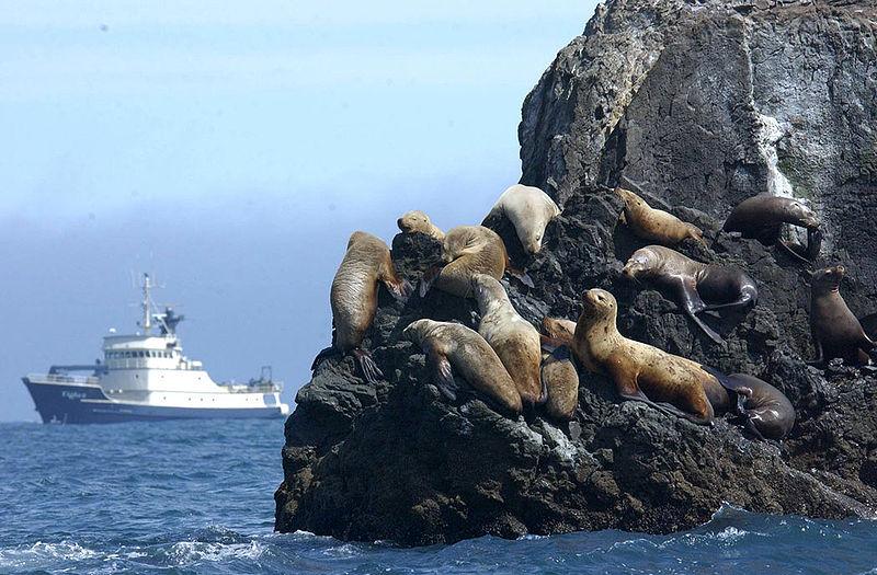 File:MV Tiglax and Steller Sea lions.jpg