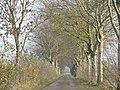 Maasbommel - panoramio (2).jpg