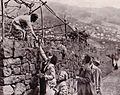 Madeirense oferecendo flores a turistas alemães, Funchal, 1936.jpg