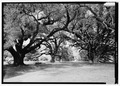 Magnolia Plantation, Louisiana Route 119, Natchitoches, Natchitoches Parish, LA HABS LA,35-NATCH.V,2-1.tif