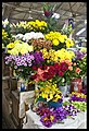 Malaysia Penang- Flower Markets-1and (4516587202).jpg