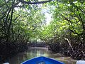 Mangroves Andaman.jpg