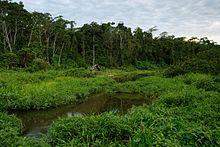 Parque Nacional Del Manu Wikipedia La Enciclopedia Libre