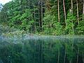 Maradki nad jeziorem Piłakno 01.JPG