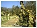 March Spring Emmendingen - Master Season Rhine Valley Photography 2013 - panoramio (2).jpg