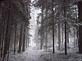 March in Jurmala - panoramio - Paul Berzinn.jpg