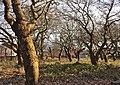 Marie Curie Field of Hope, St Mary's, Walton.jpg