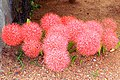 May flower (8712818675).jpg