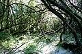 Maya Wendler - GPS 51.201643, 6.883316 - Naturschutzgebiet Unterbacher See (Eller Forst) 40627 Duesseldorf (1).jpg