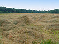Meadows in Poland Popowo Parcele (3).JPG