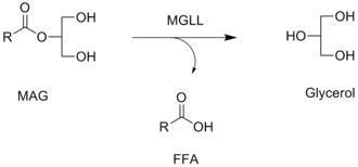 Monoacylglycerol lipase - Reaction catalyzed by MGLL, in which a free fatty acid (FFA) is released from a monoacylglycerol (MAG).