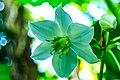 Miami - Fairchild Tropical Botanic Garden - (12260111204).jpg
