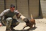 Military working dogs 110727-F-BQ124-001.jpg