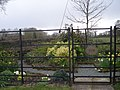 Millennium Garden - geograph.org.uk - 758310.jpg