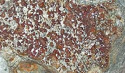 definition of lepidocrocite