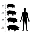 Mini Pig category by AMPA.png