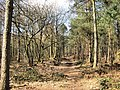 Mixed woodland in Delamere Forest - geograph.org.uk - 1750714.jpg