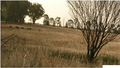 Mob of Kangaroos outside Dubbo Airport (23).png