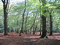 Monken Hadley Common 2.JPG