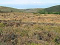 Moorland at the top of Holford Combe - geograph.org.uk - 1766894.jpg