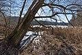 Moosburg Mitterteich-Halbinsel Uferzone Schilfgürtel 28012016 0409.jpg