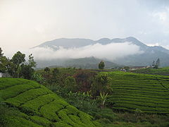 Mount Talang.JPG