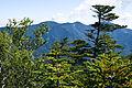 Mt.Kobushigatake 01.jpg