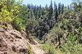 Mule Creek Trail (11407077253).jpg