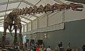 Museum koenig ausstellung 2010.jpg