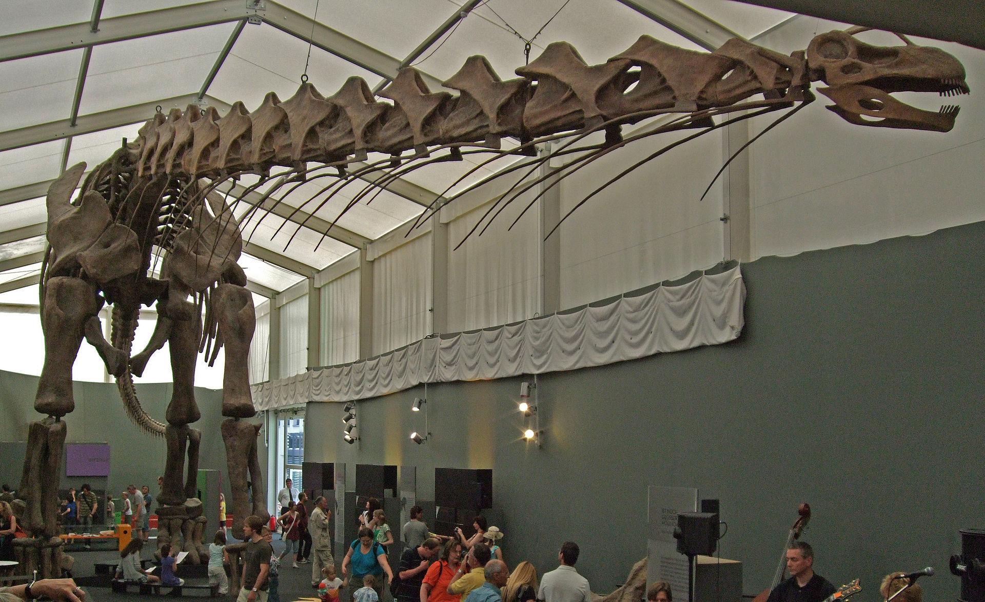 Dinosaur size - Wikipe...