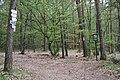 Národní přírodní rezervace Drbákov - Albertovy skály (5).jpg