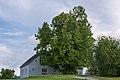 NDOÖ 380 Waldneukirchen Zeitlhuberlinde Mai 2014.jpg