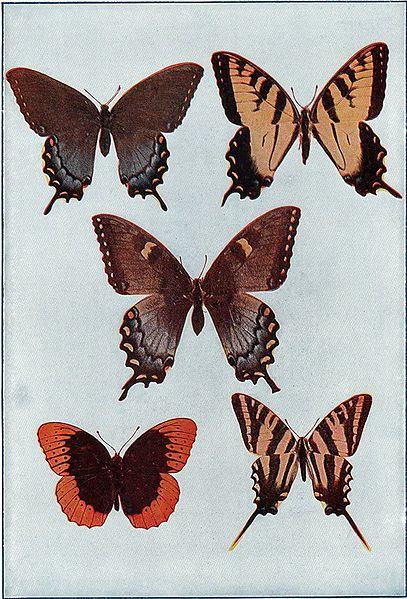 File:NSRW Mexican Butterflies.jpg