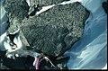 NW DuToit Mtns quartz tonalite with mafic xenolith.jpg