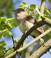 Birds in music - Wikipedia
