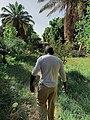 Nasr of El Nabatat Island.jpg