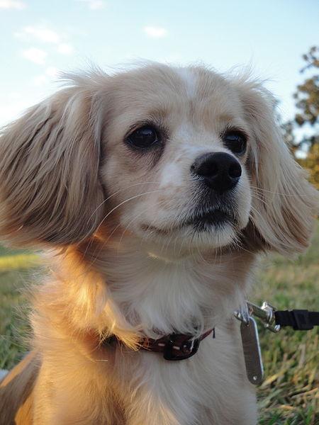 Dog  Yr Old V Lethargic Been Sick