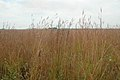 Native prairie vegetation.jpg