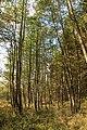 Nature reserve Dobrockovske hadce in autumn 2011 (25).JPG