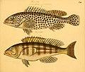 Naturgeschichte in Bildern mit erläuterndem Text (Taf. CVI) (6059223944).jpg