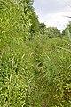 Naturschutzgebiet Haseder Busch - Im Haseder Busch (33).jpg