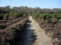 New Forest path - geograph.org.uk - 1286548.jpg