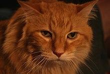 Nicholas cat.jpg