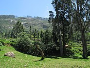 Nilgiri-Hills