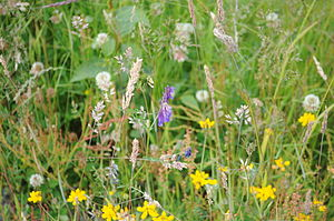 English: Wildflowers, Nisqually National Wildl...