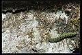 Noctuidae (8452804130).jpg