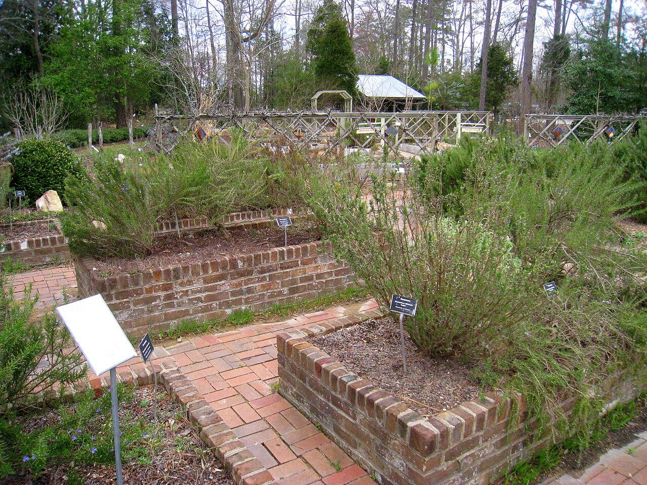 File North Carolina Botanical Garden March 15 2010 Img 4948 Jpg Wikimedia Commons