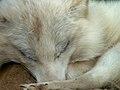 Oaklawn Farm Zoo, May 16 2009 (3539720518).jpg
