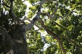 Old Tree (2081982096).jpg